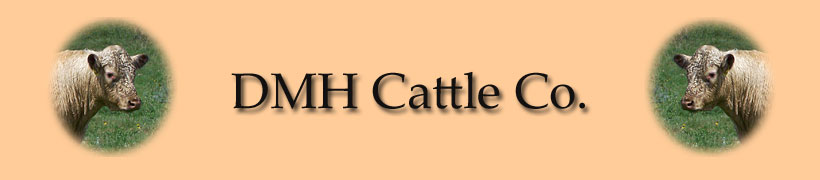 DMH Cattle Heading